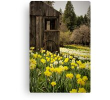 Country Spring Canvas Print