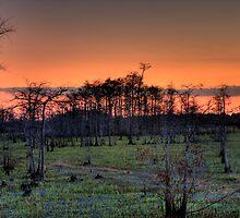 Sunset (II) at Big Cypress National Preserve, Florida by Tomas Abreu