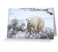 Polar Bear in the Arctic Willow Greeting Card
