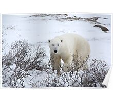 Polar Bear in the Arctic Willow Poster