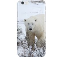Polar Bear in the Arctic Willow iPhone Case/Skin