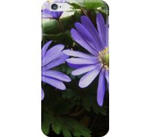 Anemone blanda iPhone Case/Skin