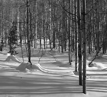 Wilderness: Aspen Grove Black and White by Andrea Jehn Kennedy
