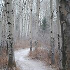 Winter Trail by kitkat55555