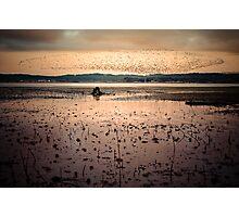 Birds at Sunrise, Fern Ridge Photographic Print