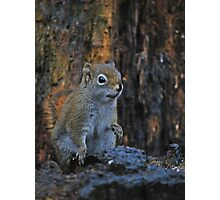 Little Squirrel Number 2 Photographic Print