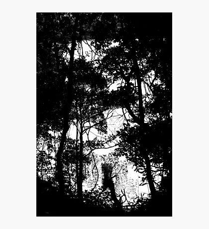 Trees Photographic Print
