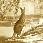 Antique Kanga by Penny Smith