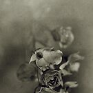 rose by Marko Beslac