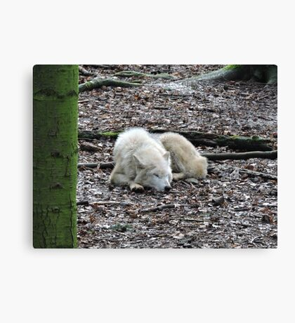Asleep...With You In My Heart Canvas Print