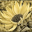 Windswept by Judylee