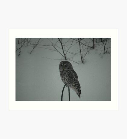 Hunting Owl Art Print