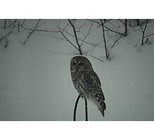 Hunting Owl Photographic Print