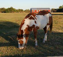 Quarterhorse by Eaglelady