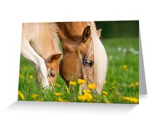 Common dinner, foal with mom Greeting Card