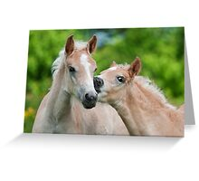 Cuddling Haflinger foals Greeting Card