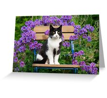 Tuxedo cat sitting on a garden chair Greeting Card