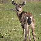 Glaring deer 1 by TheKoopaBros