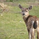 Glaring deer 2 by TheKoopaBros