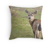 Glaring deer 2 Throw Pillow