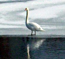 Riverside Swans II by Michelle BarlondSmith
