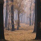 Thorough the smoke by Donovan Wilson