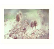 Icy Morning. Wild Grass  Art Print