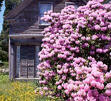 Purple Rhody House (Orleans Cape Cod) by Christopher Seufert