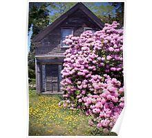 Purple Rhody House (Orleans Cape Cod) Poster