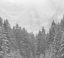 snow forest  by yyyyssss