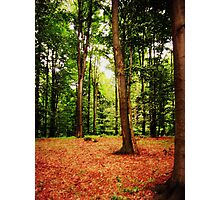 Enchanted woods Photographic Print