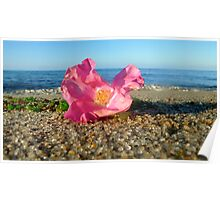 Cape Cod Rose Hip Blossom on the Beach (Peaked Hill Bars, Provincetown) Poster