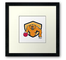 Grizzly Bear Angry Dribbling Basketball Shield Cartoon Framed Print