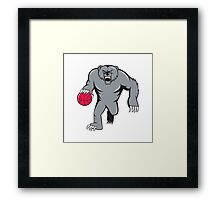 Grizzly Bear Angry Dribbling Basketball Isolated Framed Print