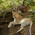 Leopard Female by Leon Rossouw