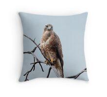 Steppe Buzzard Throw Pillow
