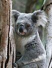 Aussie Icon by Leanne Allen