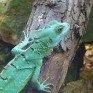 Cute Lizard - Closer by karenuk1969
