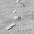 Footprints in the snow by Leanne Davis