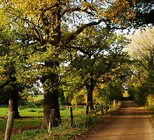 An old country road with oaktrees by jchanders