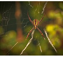Web Browser Photographic Print