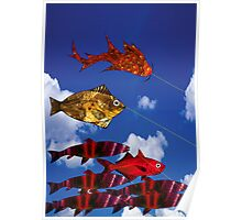 Flying Fish blue sky 5000  x  7100 Poster
