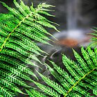 Waterfall Fern by Stephen Denham