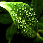 water on leaf by shakey123