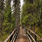 Wooden bridge in a forest by Sandra Kemppainen