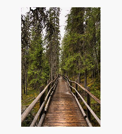 Wooden bridge in a forest Photographic Print