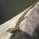 Small Lizard by Edward Denyer
