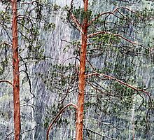 28.2.2015: Pine Trees and Sleet II by Petri Volanen