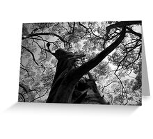 Scary Tree- Lobethal Bushland Park South  Greeting Card