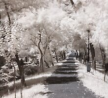 Infrared path by Sandra Kemppainen